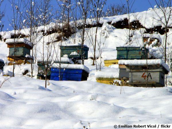 Des ruches sous la neige