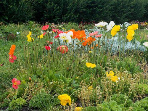 Semer des plantes vivaces plut t que de les acheter for Acheter des plantes par internet