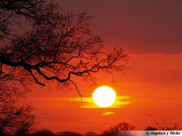 Pour solariser un sol, il faut du soleil...