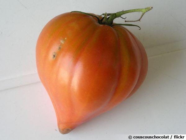 La véritable tomate Coeur de boeuf et sa forme caractéristique