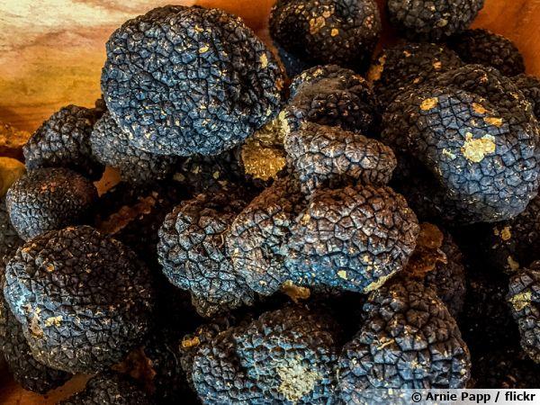 Truffes récoltées en Croatie