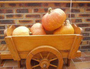 Belle récolte qui s'en ira en tartes et soupes, un régal ! par BLANCHOT YVETTE