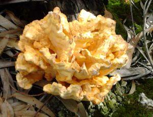 Une espèce de champignon dans le bois à côté de chez mois au Portugal. Le 27 Septembre 2012 par REGINA BARATA