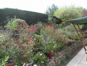 Floraison démente de mai à novembre..... par SALVIA42