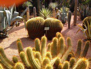 Le jardin majorelle à marrakech, un jardin pour les cactophiles comme moi par JAMILA