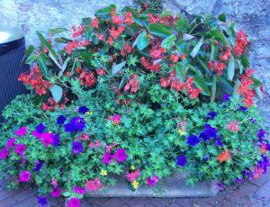 Jardiniere en ville par MARIE
