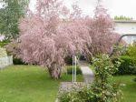 mon jardin en Lorraine
