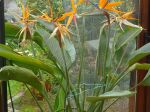 6 oiseaux dans la m�me plante en v�randa