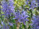 l'ai longtemps cherché le nom de cette fleur de mon jardin j'ai trouvé un indice grâce à une personne qui ne fait que de la photo de fleurs et j'ai complété avec votre site merci
