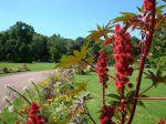 Ricin en fleurs au Parc floral d'Orléans