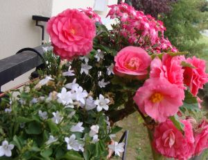 Une jardini�re en fin d'�t�... par BLAN
