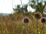 La photo et de moi je suis photographe amatrice. et je peut vous proposer les photos de fleur que je fait.