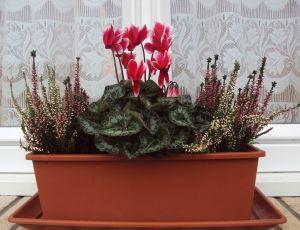 Jardiniére d automne  par CLAUDINE