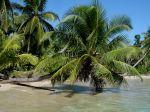 Cocos nucifera à Madagascar