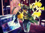 Voici les narcisses jaunes sur mon bureau au Ch�teau de Chambiers