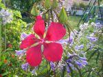 Une plante absolument superbe!!!!