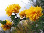 D'autres fleurs sur mon blog