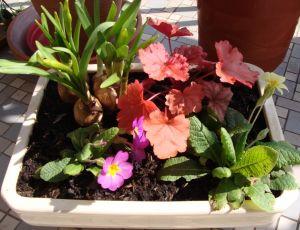 Une petite jardinière de ma composition... par BLAN