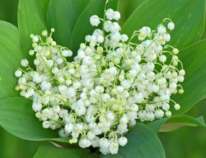 Bonne fête du 1 mai a tous ! par JULES VERNE