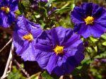 J'aime beaucoup prendre des photos de fleurs, alors cadeau, si vous en voulez d'autres , à bientôt Mélitta