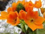 Jolie plante d'intérieur et belle couleur orange