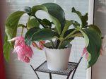 Magnifique plante résistante avec de superbes fleurs.