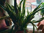 Très décorative cette plante !