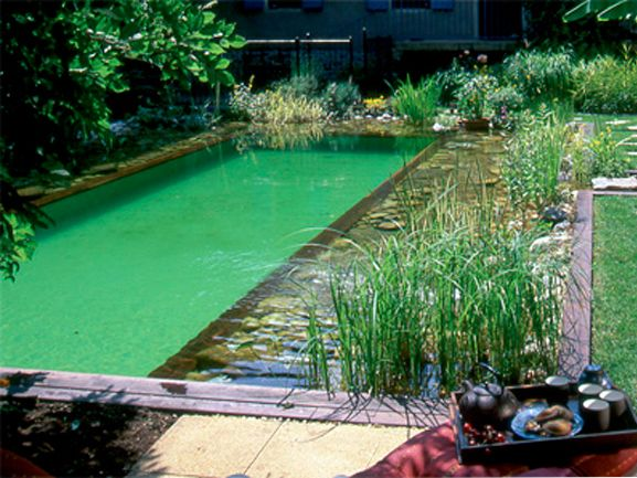 La piscine naturelle for Bassin naturel piscine
