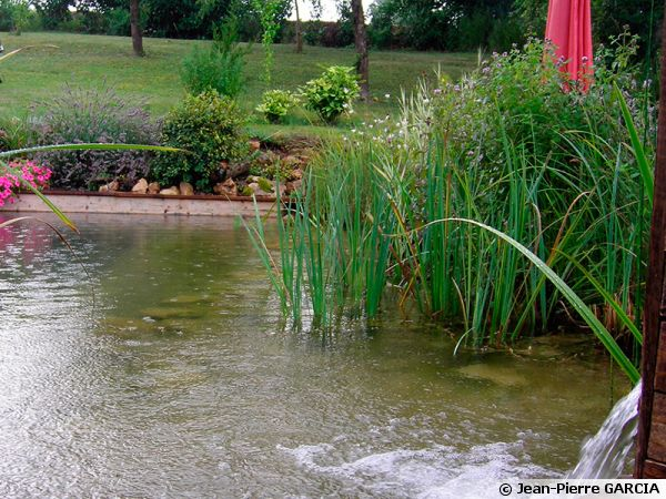 Construire une piscine naturelle for Bassin naturel piscine