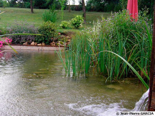 Construire une piscine naturelle for Construire sa propre piscine