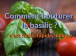 Comment bouturer le basilic ?