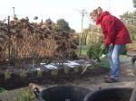 Bien planter de jeunes plants en godets