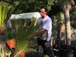 Les cactées et plantes succulentes