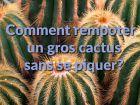 Comment rempoter un gros cactus sans se piquer ?
