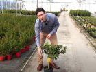 Le citronnier, comment réussir sa culture pour obtenir des citrons ?