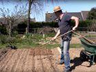 Comment planter les oignons ?