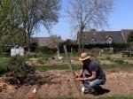 Comment planter la pomme de terre ?