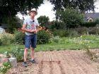 Comment semer du haricot rouge ?