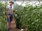Entretien des plantations de légumes sous serre