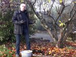 Quel entretien pour les arbres fruitiers après la récolte ?