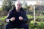Grives et merles au jardin en hiver