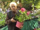 L'hibiscus des marais, conseils de culture