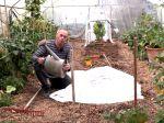 Quelques idées de plantations sous serre après l'été