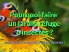Insectes en voie de disparition, humanité en danger ?