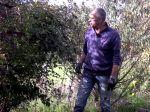 Quel est l'intérêt des ronces au jardin ?