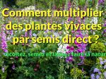 Comment multiplier des plantes vivaces par semis direct ?
