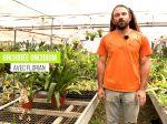 L'oncidium, une orchidée prisée des collectionneurs à la portée de tous