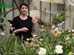 Le paphiopedilum, une orchidée idéale pour les débutants