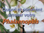 Quand et comment arroser un phalaenopsis ?