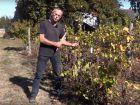 Plantation, entretien et conduite de la vigne